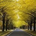 札幌市営住宅 募集時期について