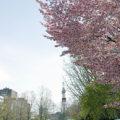 【定期募集・短期募集】札幌市営住宅の募集スケジュール2021年度